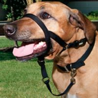 Walk n Train® Extra Large Head Halter for Dogs in Black