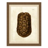 Framed Giclèe Turtle Shell Print I