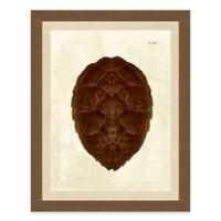 Framed Giclèe Turtle Shell Print III