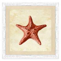 Coral Starfish I Framed Art Print