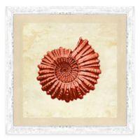Coral Nautilus II Framed Art Print