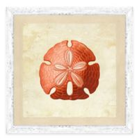 Coral Sand Dollar IV Framed Art Print