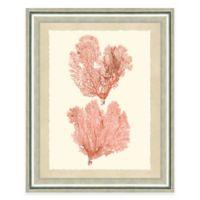 Double Pink Sea Fan II Framed Art Print