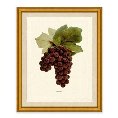 Grape i framed art print