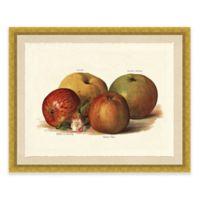 Rustic Apple Framed Art Print