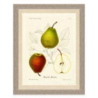 Pear Sketch Framed Art Print