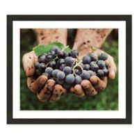 Grapes in Hand Framed Photographic Print