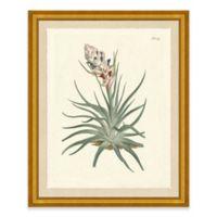 Desert Plant II Framed Art Print