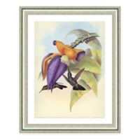 Hummingbird Scene II Framed Art Print