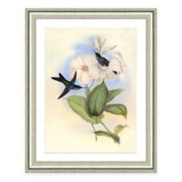 Hummingbird Scene III Framed Art Print