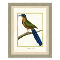 Tropical Bird I Framed Art Print