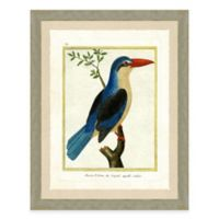 Tropical Bird II Framed Art Print