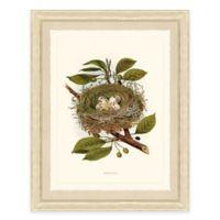 Nest and Eggs III Framed Art Print