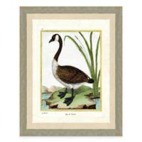 Goose I Framed Art Print