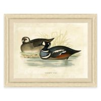 Duck Scene I Framed Art Print