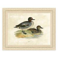 Duck Scene II Framed Art Print