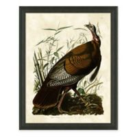 Audubon Turkey I Framed Art Print