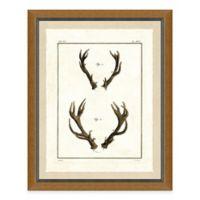 Double Antlers I Framed Art Print