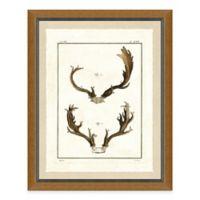Double Antlers II Framed Art Print