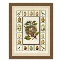 Nest and Eggs with Border I Framed Art Print