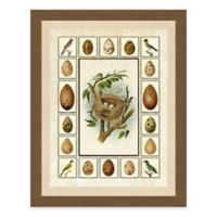 Nest and Eggs with Border II Framed Art Print