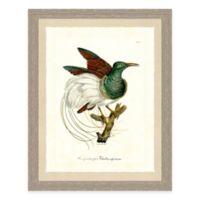 Colorful Bird I Framed Art Print