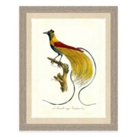 Colorful Bird II Framed Art Print