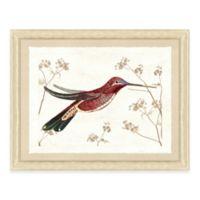 Hummingbird Scene IV Framed Art Print
