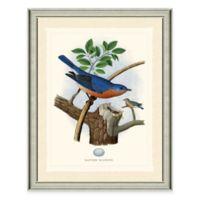 The Framed Giclée Bluebird Print Wall Art