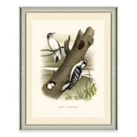 Woodpeckers Framed Art Print
