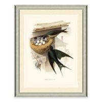 The Framed Giclée Swallow Print Wall Art