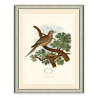 Dove Framed Art Print