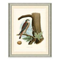 The Framed Giclée Sparrow Hawk Print Wall Art
