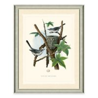 Gnatcatchers Framed Art Print