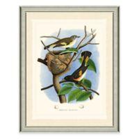 Redstart Framed Art Print
