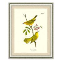 The Framed Giclée Warbler Print Wall Art