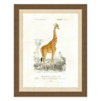 Giraffe Framed Art Print