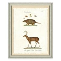The Framed Giclée Armadillo and Deer Print Wall Art