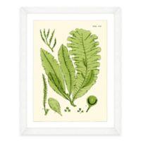 Framed Giclée Green Seaweed Print I Wall Art