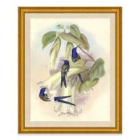 Hummingbird I Framed Wall Art Print