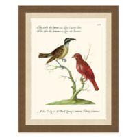 Colorful Birds II Framed Art Print