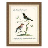 Colorful Birds III Framed Art Print