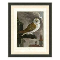 Owl I Framed Art Print