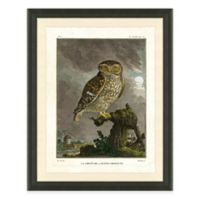 Owl II Framed Art Print