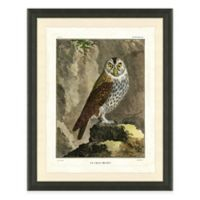 Owl III Framed Art Print