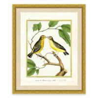 Bird on a Branch III Framed Art Print