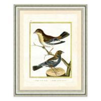 Bird on a Branch IV Framed Art Print