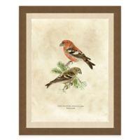 Winter Bird I Framed Art Print