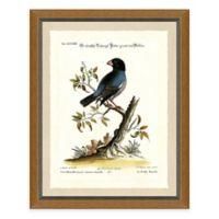 Bird Scene II Framed Art Print