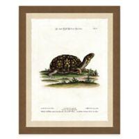 Tortoise I Framed Art Print